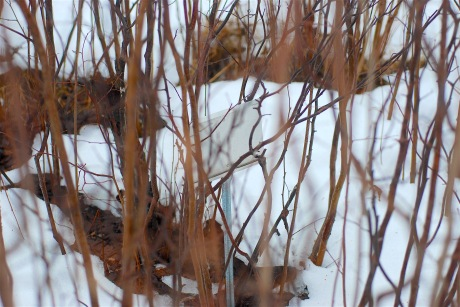 black-walnut-grove-placard-in-middle-of-nut-bush-feb-2017
